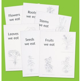 Plants We Eat Replicards