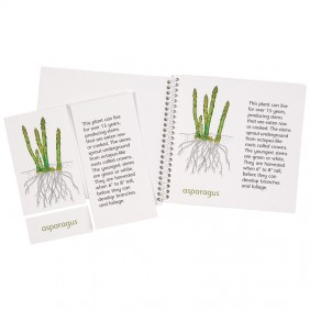 Plants We Eat Classification Booklets & Cards