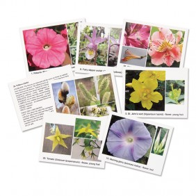 48 Flower Cards for Study & Sorting