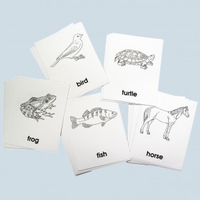 Parts of the Animal Cards