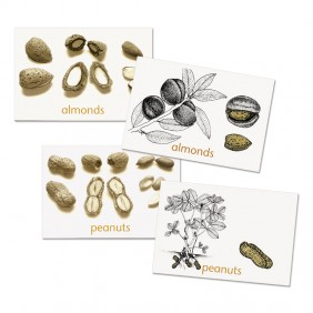 Nuts Cards