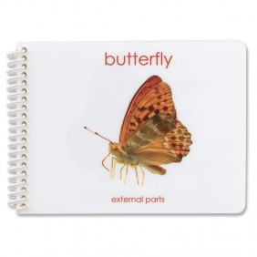 External Parts of the Butterfly Booklet