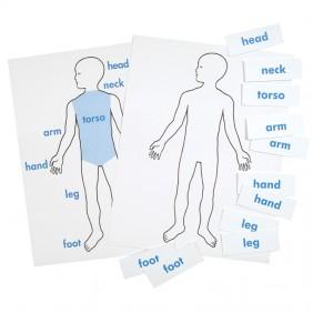 Exterior Body Parts