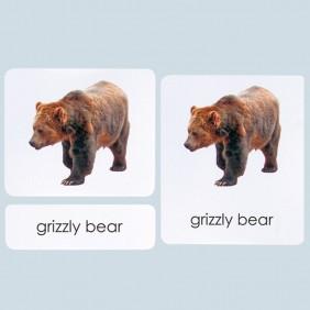 Mammals Classification Three-Part Photo Cards