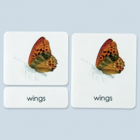 External Parts of the Butterfly Photo Cards