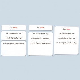Parts of the Lobster Definition Cards