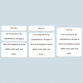 Parts of the Spider Definition Cards