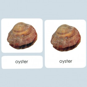 Mollusks 3-Part Photo Cards