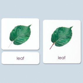 Parts of the Leaf 3-Part Photo Cards