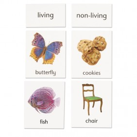 Living / Non-Living Classification