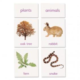 Plant / Animal Classification