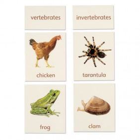 Vertebrate / Invertebrate Classification Cards