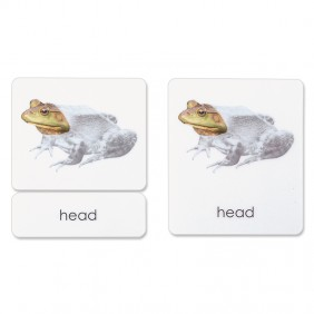 Parts of the Frog 3-Part Photo Cards