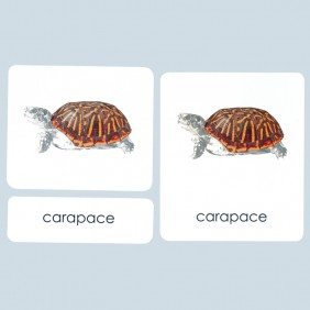 Parts of the Turtle Three-Part Photo Cards
