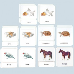 All Five Sets of Vertebrate Three-Part Photo Cards
