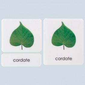 Botany Cabinet Leaf Shapes
