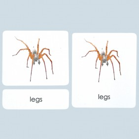External Parts of the Spider Photo Cards