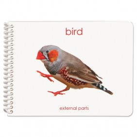 Parts of the Bird Booklet