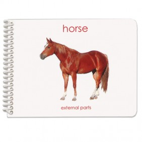 Parts of the Horse Booklet