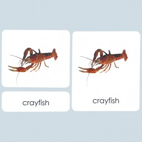 Arthropods 3-Part Photo Cards
