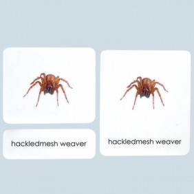Arachnids 3-Part Photo Cards