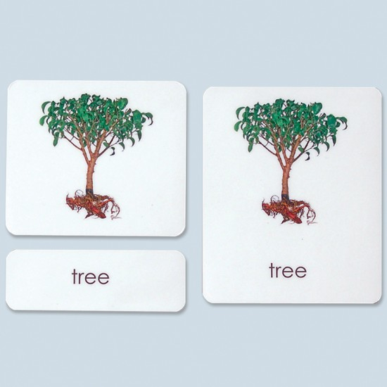 Parts of the Tree Cards
