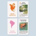 Elementary World Amphibians Cards