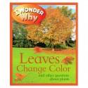 I Wonder Why Leaves Change Color