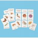 Classification of Invertebrates