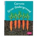 Carrots Grow Underground