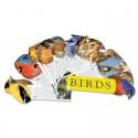 Birds Fandex