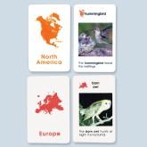 World Birds Cards