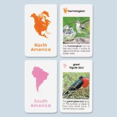 World Birds Cards - Unlaminated -  Elementary