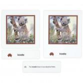 Animals of Australia Nomenclature Cards