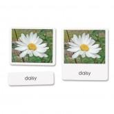 Garden Flowers Vocabulary/Reading Cards