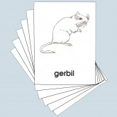 Parts of the Gerbil Cards