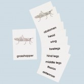 Parts of the GRASSHOPPER Cards