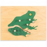 Parts of the Frog Puzzle
