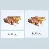 Amphibians 3-Part Photo Cards