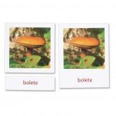 Fungi Cards