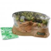 Planet Frog - Live Frog Habitat