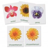 Flowers Cards