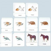 All 5 Parts of the Vertebrate 3-Part Photo Card Sets