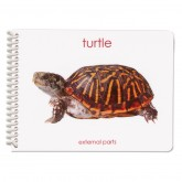 Parts of the Turtle Booklet