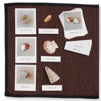 Shells with Matching Cards