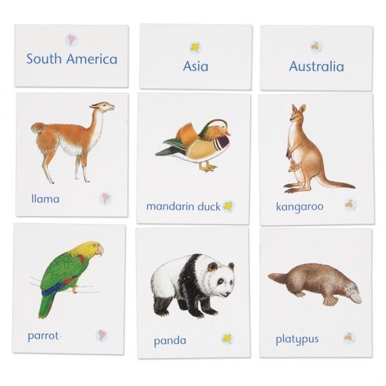 Animals Of Seven Continents Montessori Services