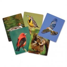 Birds of North America Flash Cards