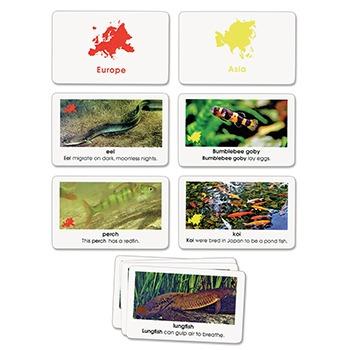 World Fish Cards