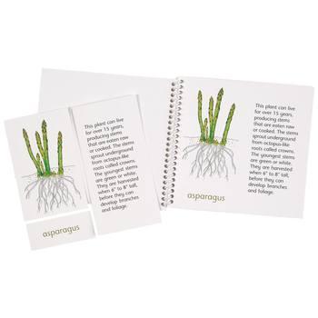 Plants We Eat Booklets & Cards