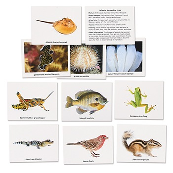 Major Phyla of the Animal Kingdom Cards